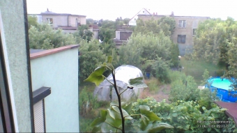 Bluszcz Hydroponiczny - 2019.06.21 09:31