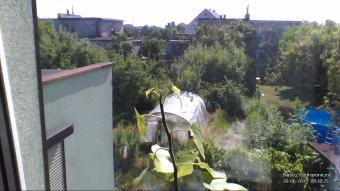 Bluszcz Hydroponiczny - 2019.06.30 09:30